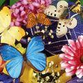 Butterfly (177)