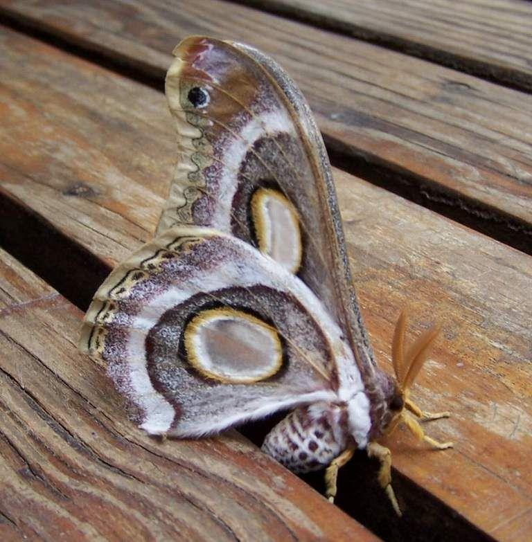 Detail du papillon