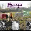 Ma progression avec les poneys d'une amie