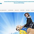 Site internet handi'chiens a fait peau neuve
