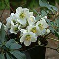 Kal'manach de printemps : Semaine du 29 avril au 5 mai 2013