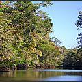 Costa Rica 4 - Animaux de la forêt tropicale