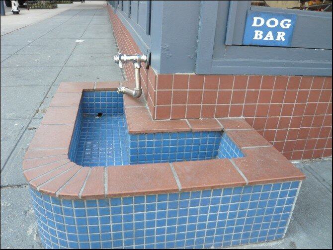 Doggy bar...