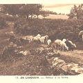 Berger et ses moutons