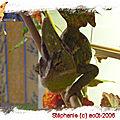2006 08 gedeon dans son terrarium