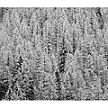 Parure d'hiver 2 © Tous droits réservés.