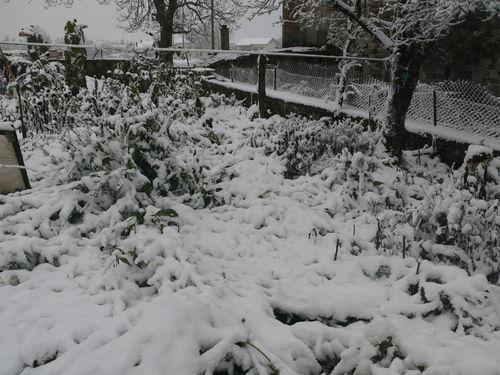 2008 10 29 Premère neige de la saison, le jardin n'a pas apprécié