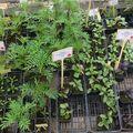 Où trouver des semences et des plants bio en touraine ?