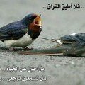 الطورشى مصطفى