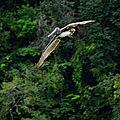 Animaux du Guatemala