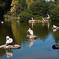 domaine des pelicans frisés-0249