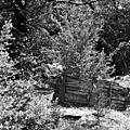 Collections - Photos JMP©Koufra 12 - Le Caylar - 29042017 - 086