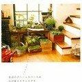 Des bacs de verdure dans la maison
