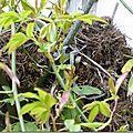 Les nids dans ma courette