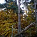 2009 10 31 Un bois à l'automne