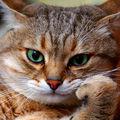 Les chats (112)