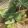 PLANTE GRASSE 10