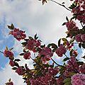 Ciel fleuri
