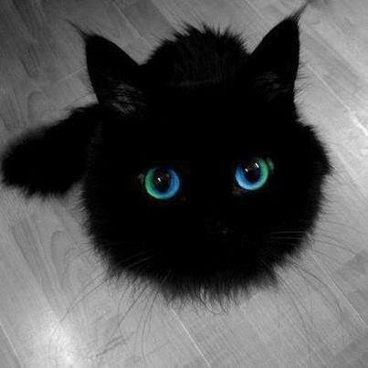 chat noir4745384105_1805064947_n