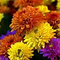 Le langage des fleurs…
