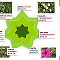 Fatigue, apprentissage, concentration, mental, sommeil, parler en public / examen & concours / elixirs floraux : variés