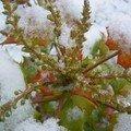 Le jardin en hiver...