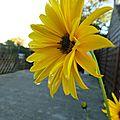 Fleurs mouillées2