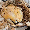 Poulet de ferme au foin en croûte de pain