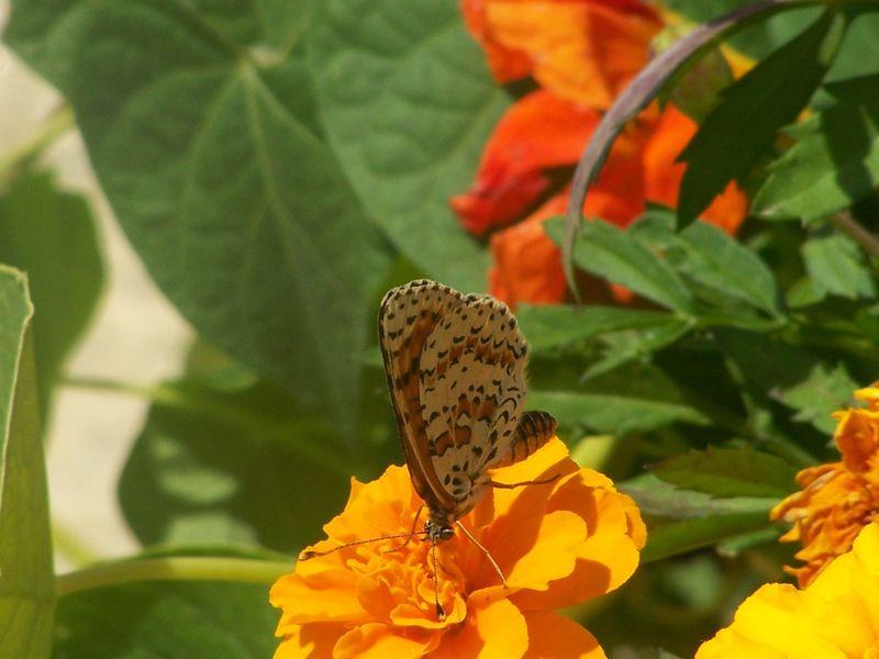 100_1175_papillons_6