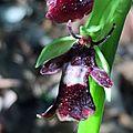 Des <b>orchidées</b> près de chez vous !
