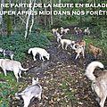 Un petit tour dans les bois !!!! ohhhhh happy dogs !!!
