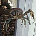 Maison du crabe