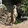 Parc zoologique de mulhouse - alsace