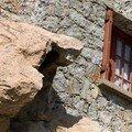 Détail d'une maison sur le rocher.Copyright Olivier GOMEZ