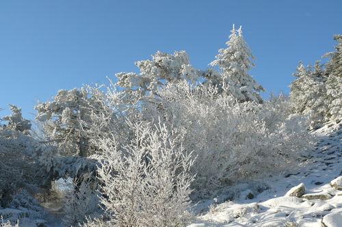 2008 11 27 Les arbres givrés au Lizieux