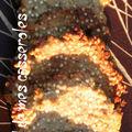 Biscuits croquants au quinoa