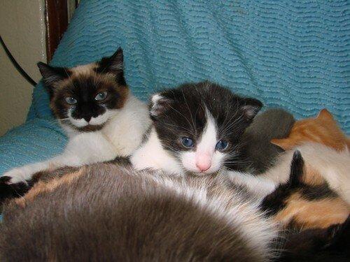 2008 04 12 Blanco avec l'un de ses chatons