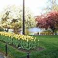 BOSTON COMMON PARK (208).JPG