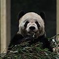Chongquing et son zoo