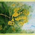 aquarel mimosa