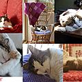 La semaine en poésie: le chat