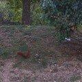 Un p'tit écureuil