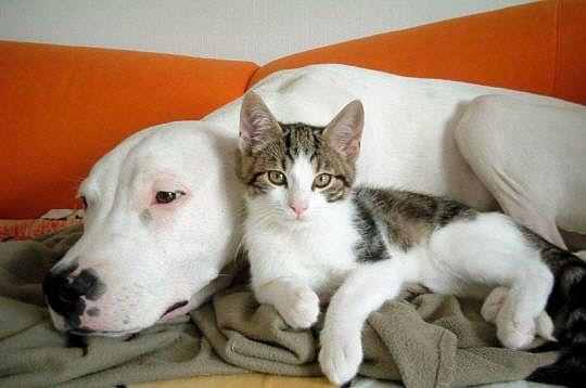 chien- et chat couverture-235355