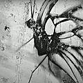 « Les peintres naissent poètes », par Silvère Jarrosson