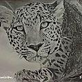 132 Le léopard, 50X70 - N'EST PLUS DISPONIBLE