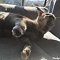 Un chat sous le soleil... instants bonheurs