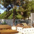 chantier u tramway de nice n° XXX 011