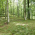 Forêt Bage