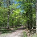 La forêt des étangs 1