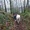 Balade à cheval dans la forêt P1080291